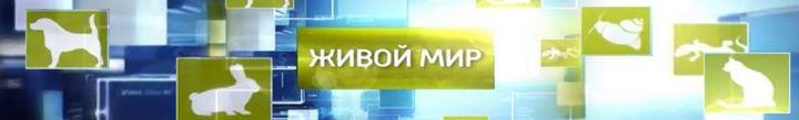 zhivoj-mir
